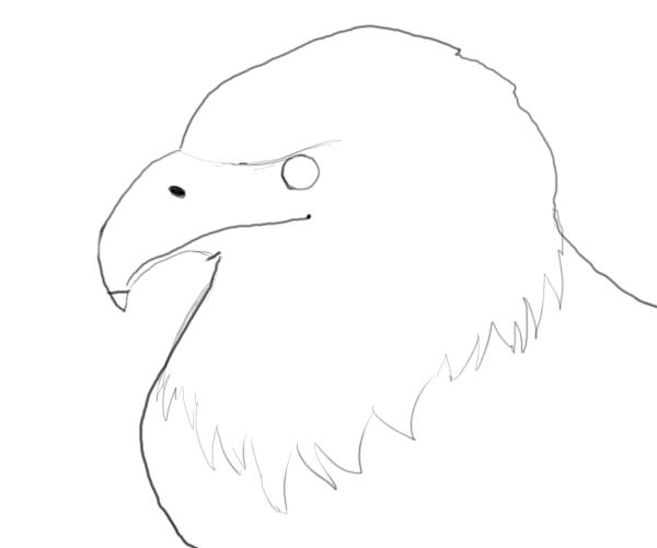 Small Eagle Drawing Shape to The Drawing Just