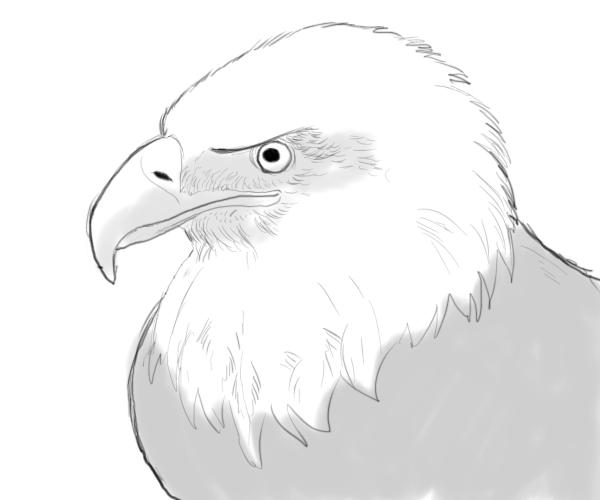bald-eagle-drawings-7
