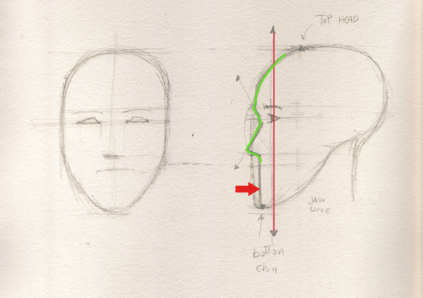 Line Drawing Face : Face drawing the profile factory