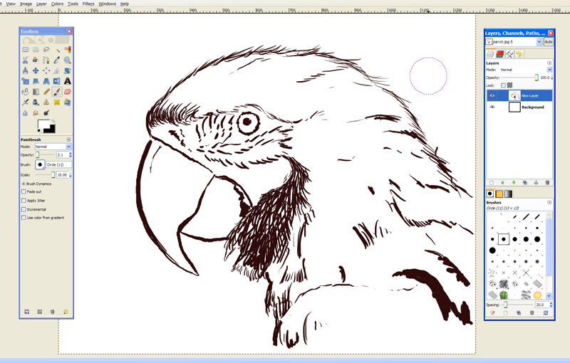 free drawing software gimp parrot drawing - Free Drawing Pictures