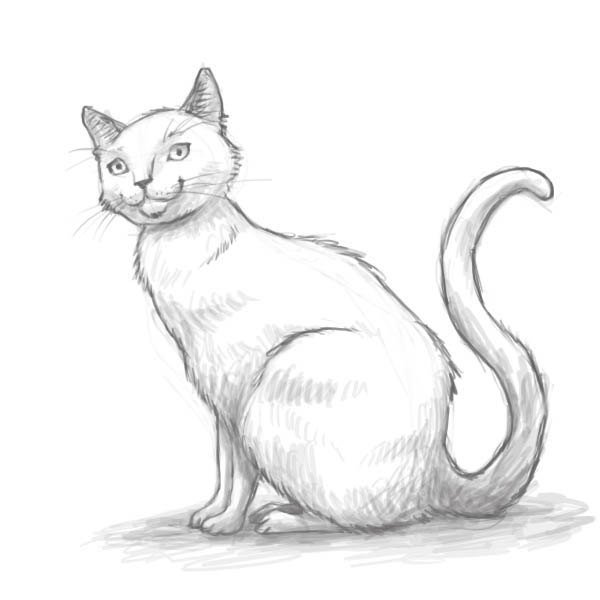 How to draw a cat the finished result